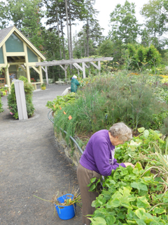 Therapeutic Horticulture at the Gardens