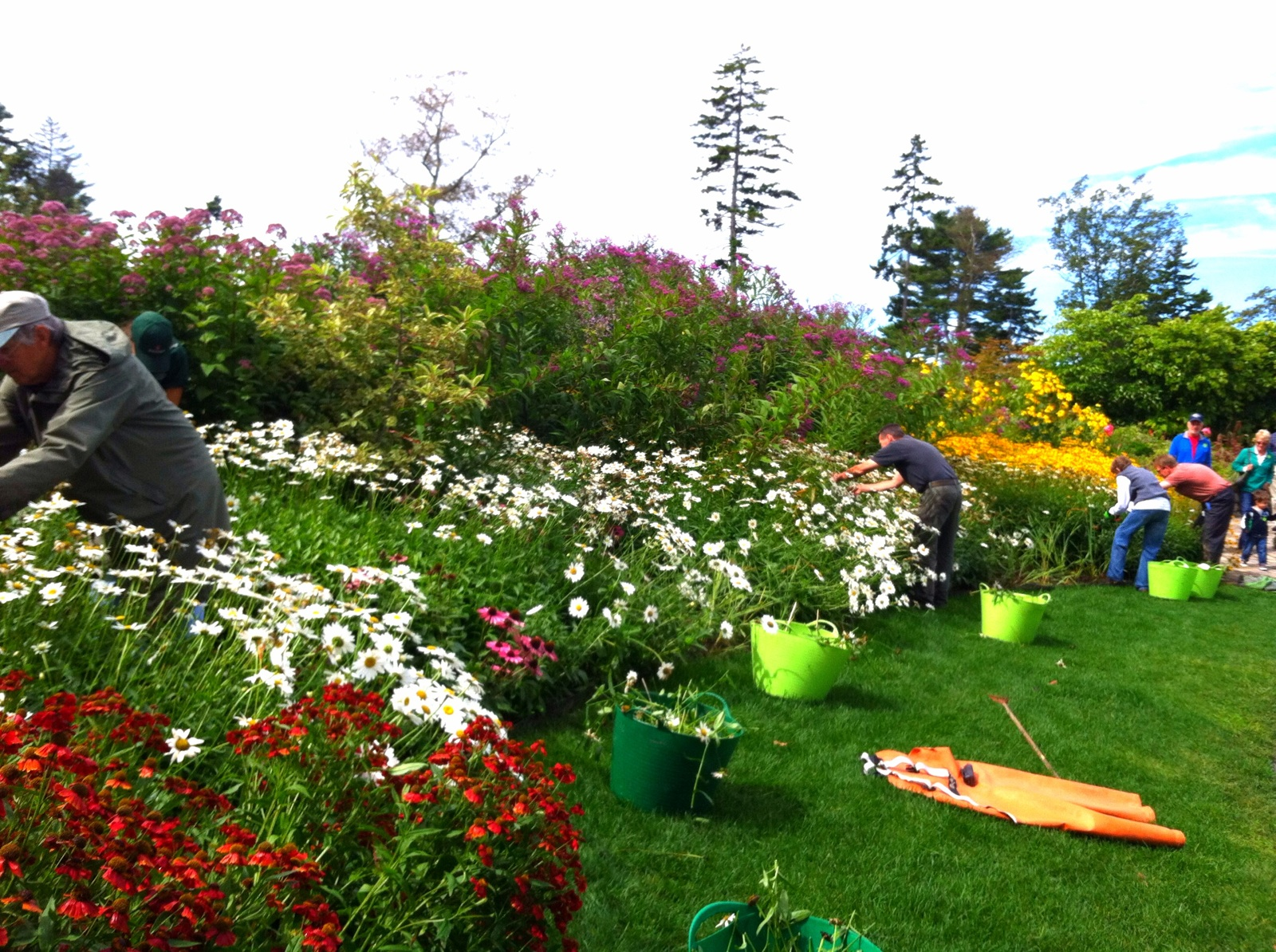 A Group Of Volunteers Hard At Work, Deadheading In The Bibby And Harold  Alfond Childrenu0027s Garden.
