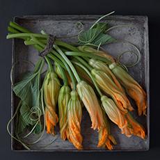 VegetableFruitStudies17sq