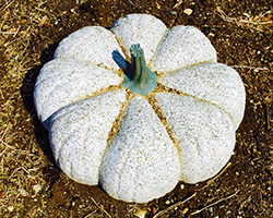 resizeStone Pumpkin