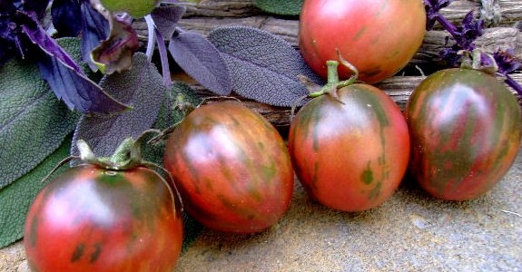 Black Vernissage Tomatoes
