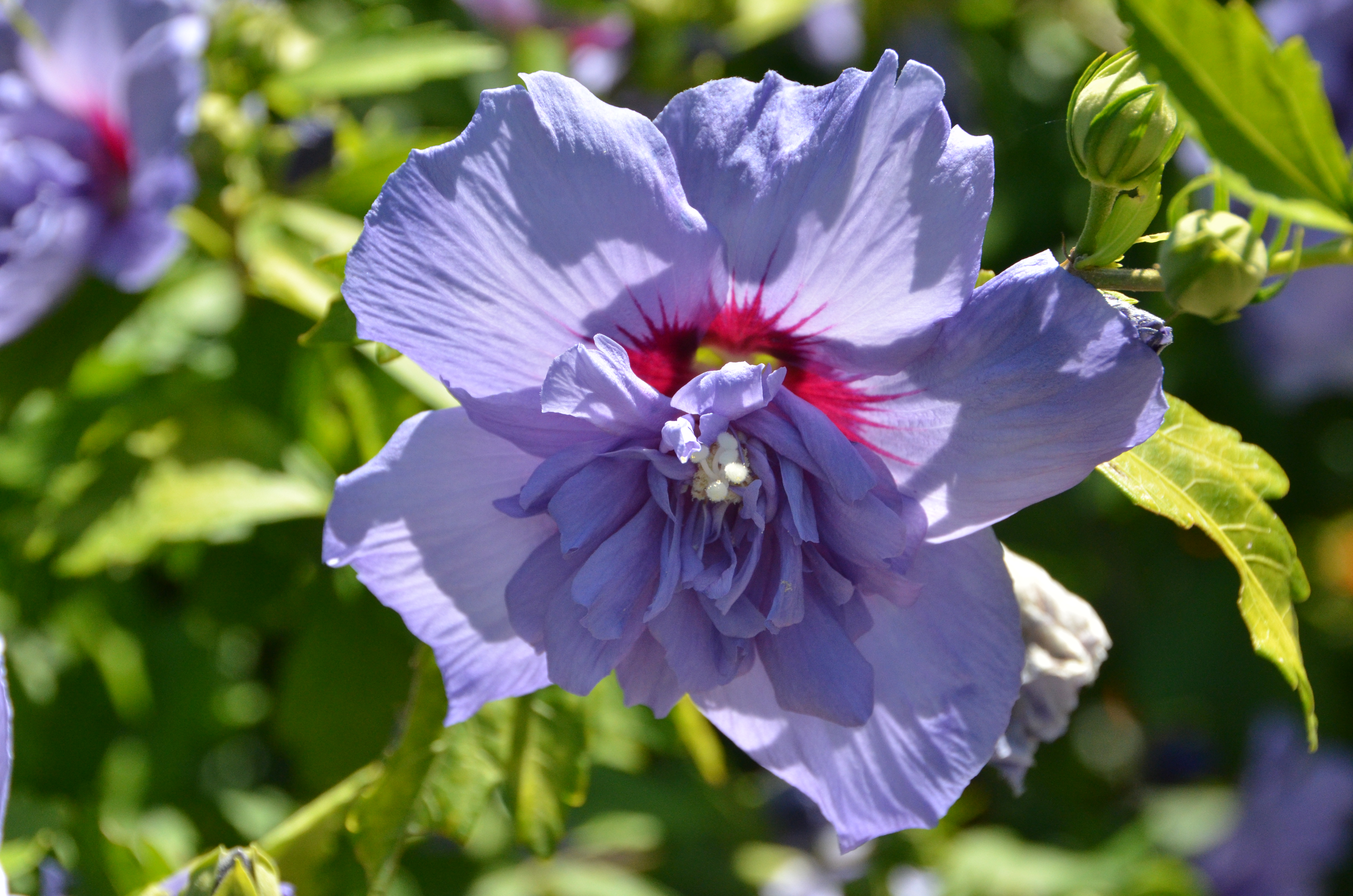 Whats In Bloom This Week Coastal Maine Botanical Gardens