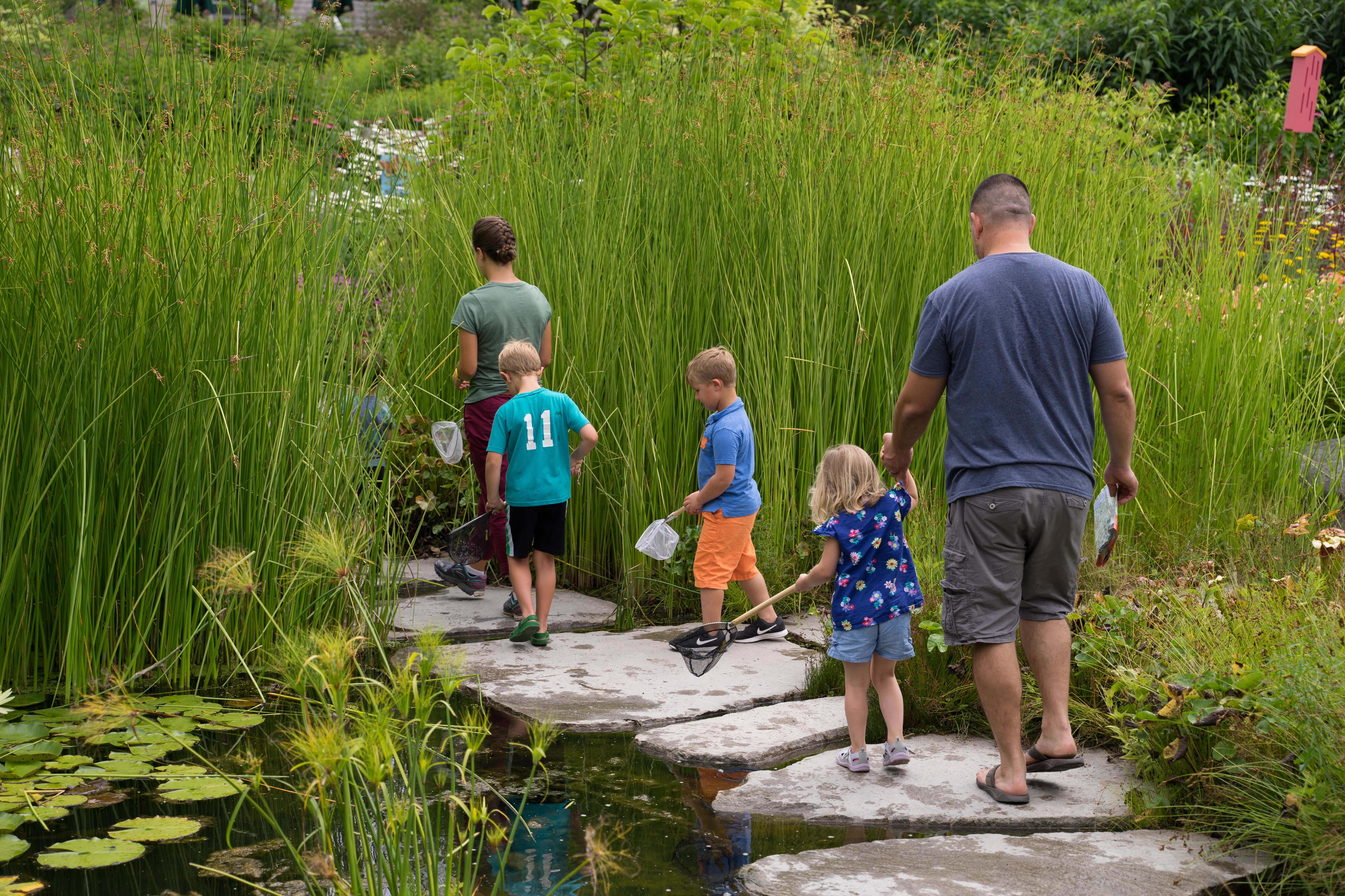 Pond Investigations @ Bibby and Harold Alfond Children's Garden