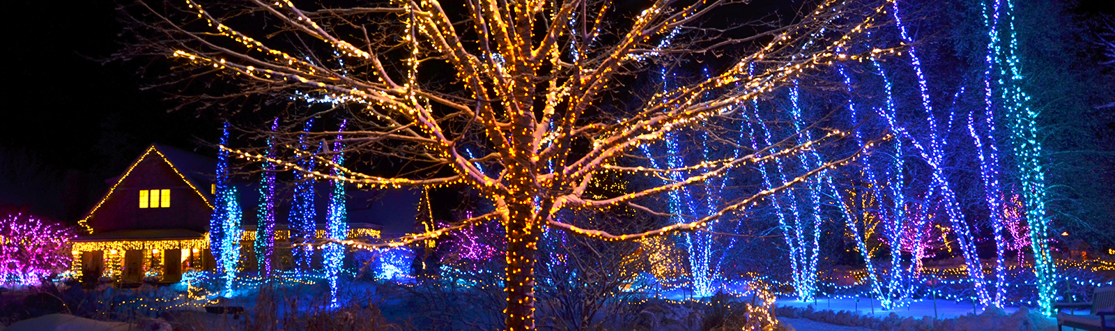When Were The First Electric Christmas Lights Used.Gardens Aglow Coastal Maine Botanical Gardens