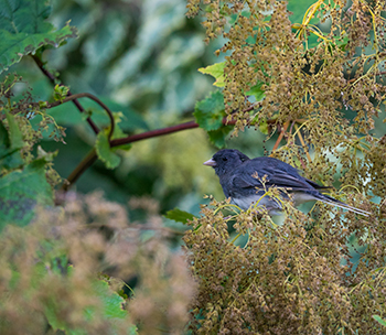 For A Truly Holistic Bird Friendly Habitat Having Plants That Flower Or Fruit Throughout The Year Is Bonus