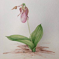Botanical art by Katy Janelle